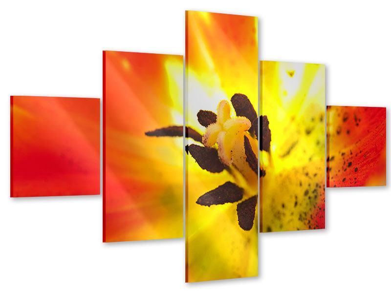 Acrylglasbild 5-teilig Die Narbe einer Tulpe XXL