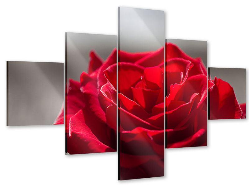 Acrylglasbild 5-teilig Rote Rosenblüte