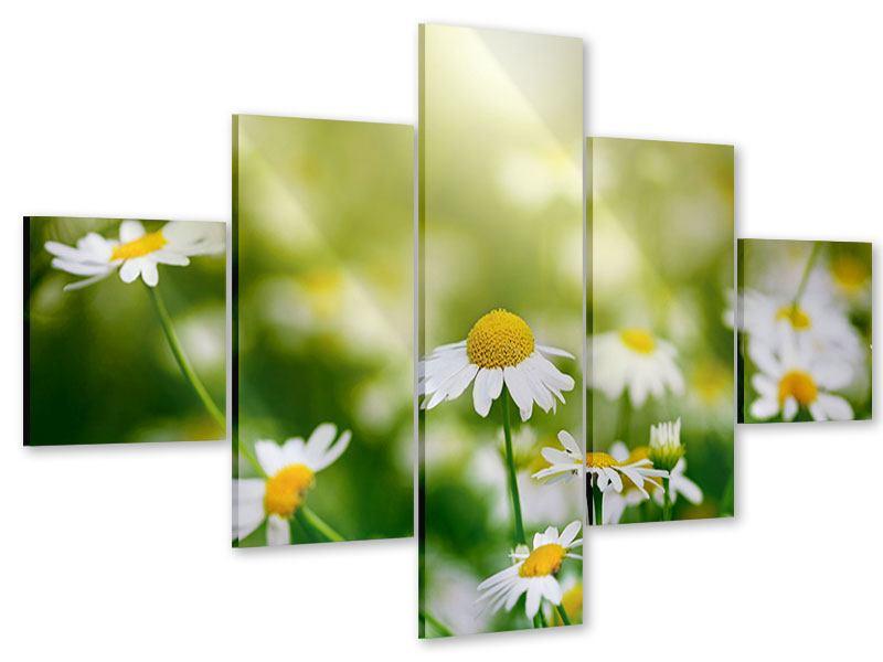 Acrylglasbild 5-teilig Die Gänseblümchen