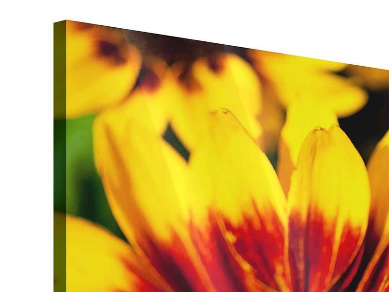 Acrylglasbild 5-teilig Reife Sonnenblumen