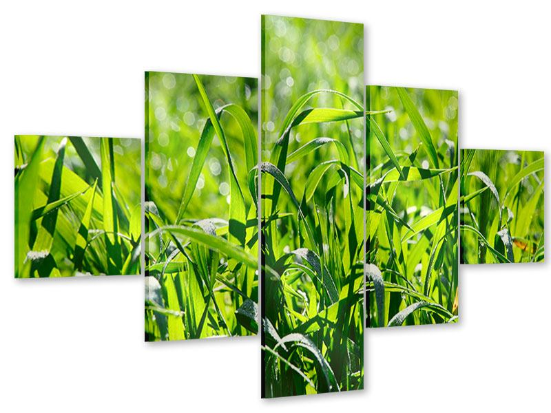Acrylglasbild 5-teilig Sonniges Gras