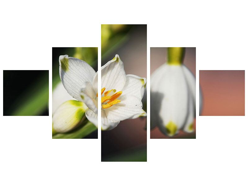Acrylglasbild 5-teilig Schneeglöckchen XXL
