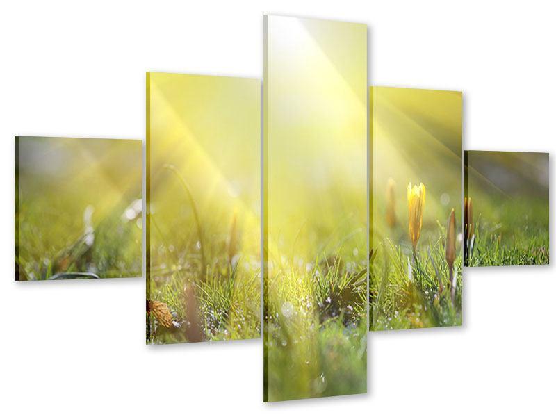 Acrylglasbild 5-teilig Blumige Wiese