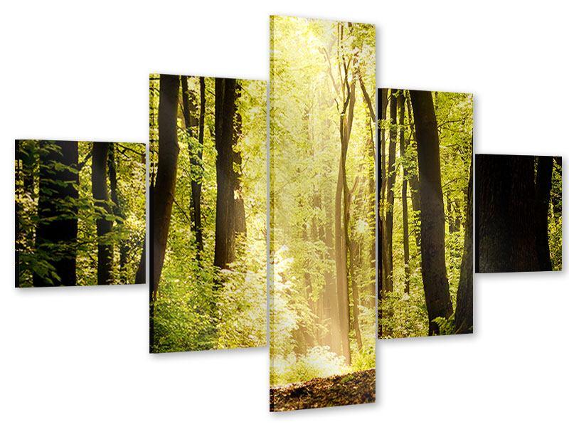 Acrylglasbild 5-teilig Sonnenaufgang im Wald