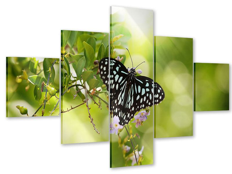 Acrylglasbild 5-teilig Papilio Schmetterling XXL