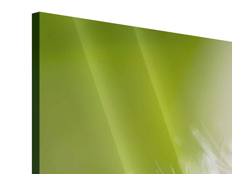 Acrylglasbild 5-teilig Pusteblume Löwenzahn