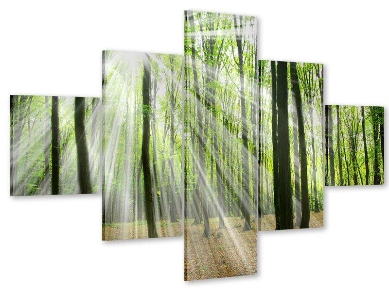 Acrylglasbild 5-teilig Magisches Licht in den Bäumen