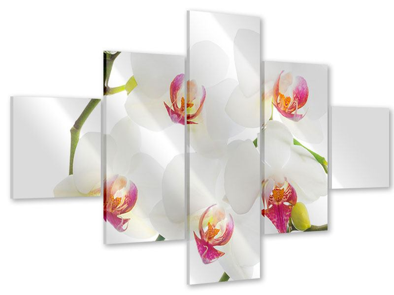 Acrylglasbild 5-teilig Orchideenliebe