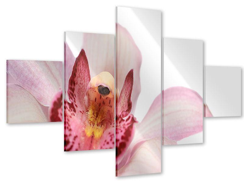 Acrylglasbild 5-teilig Orchideenblüte XXL
