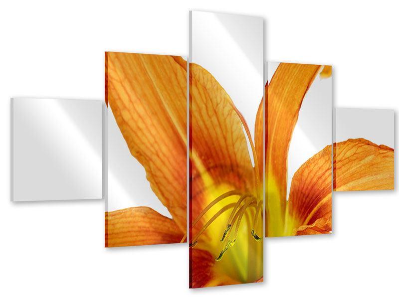 Acrylglasbild 5-teilig Die Tiger-Lilie