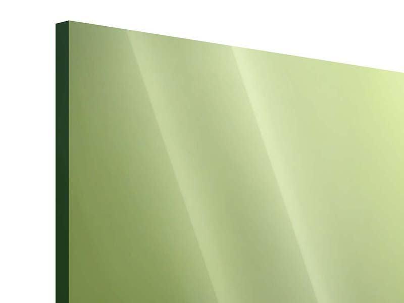 Acrylglasbild 5-teilig Pusteblume XL im Morgentau