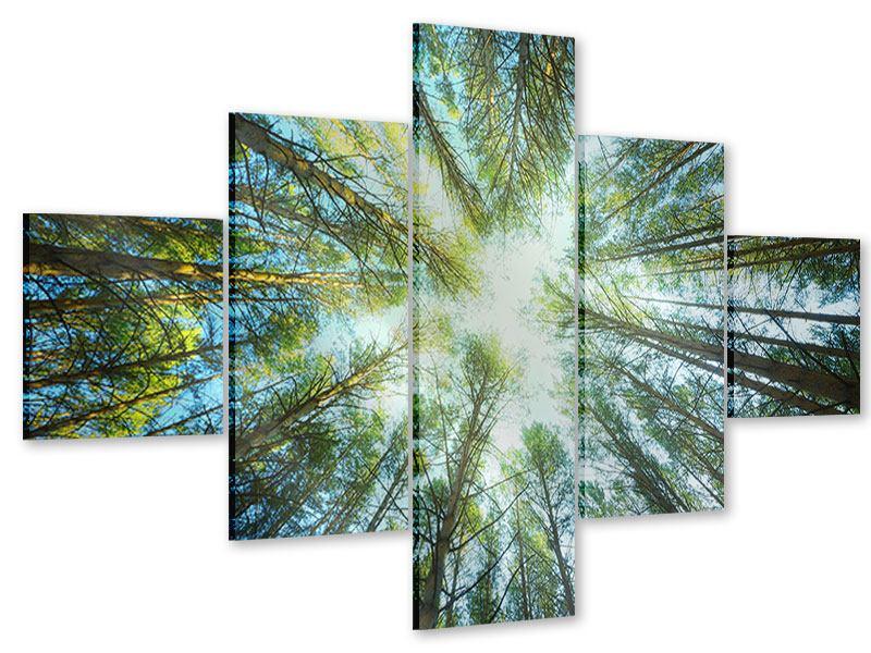 Acrylglasbild 5-teilig Kiefernwald