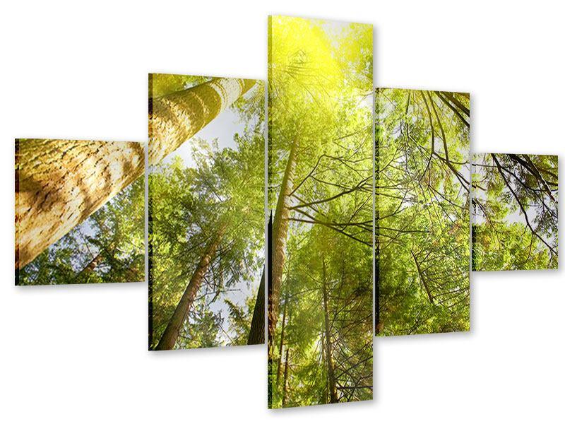 Acrylglasbild 5-teilig Baumkronen in der Sonne
