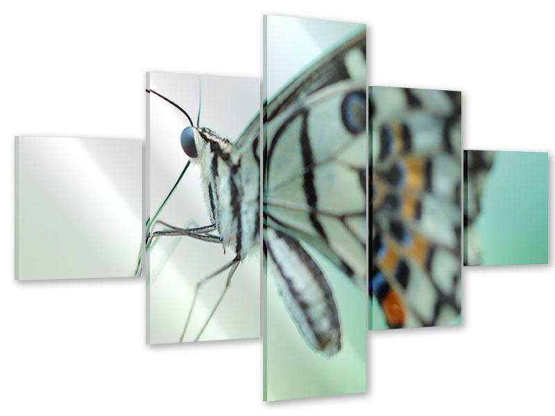 Acrylglasbild 5-teilig Schmetterling XXL
