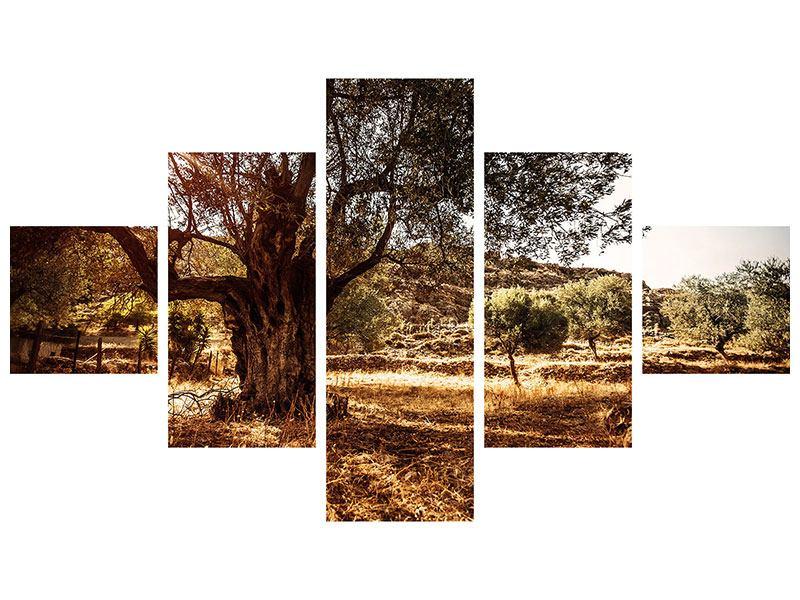 Acrylglasbild 5-teilig Olivenhain
