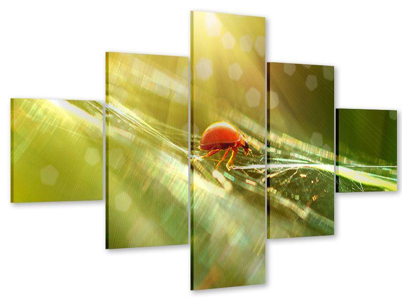 Acrylglasbild 5-teilig Marienkäfer im Sonnenlicht
