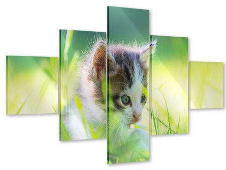 Acrylglasbild 5-teilig Kitten