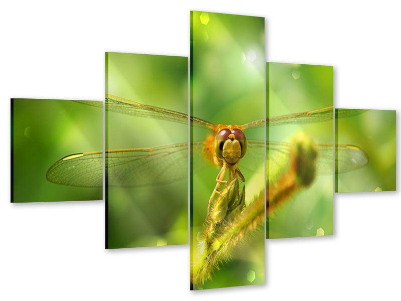 Acrylglasbild 5-teilig XXL-Libelle