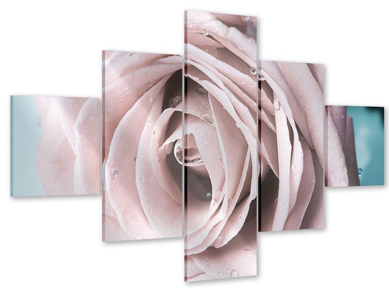 Acrylglasbild 5-teilig Pastellrose