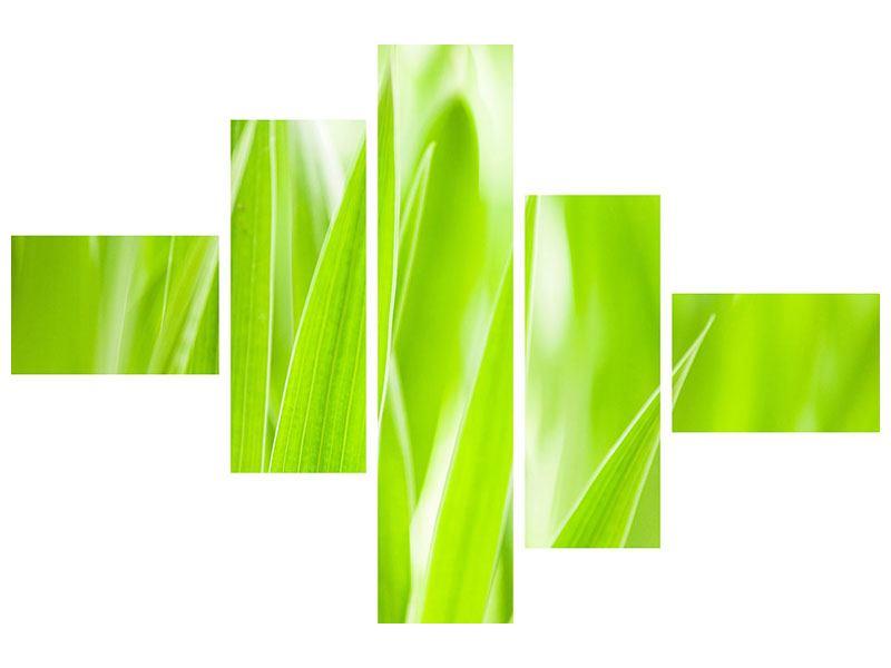 Acrylglasbild 5-teilig modern Gras XXL