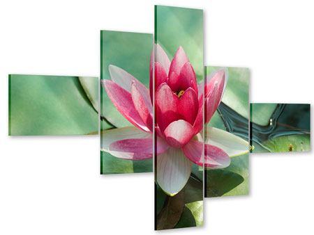 Acrylglasbild 5-teilig modern Der Frosch und das Lotusblatt