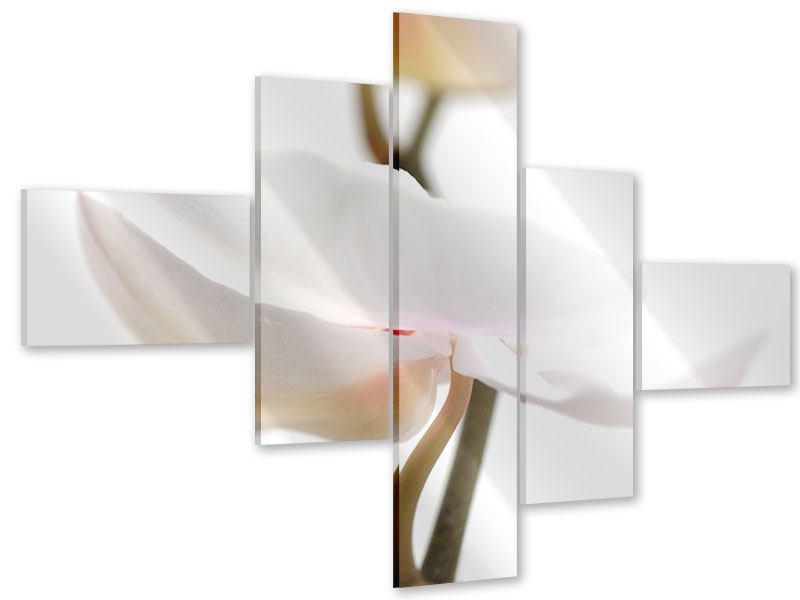 Acrylglasbild 5-teilig modern XXL Orchideenblüte