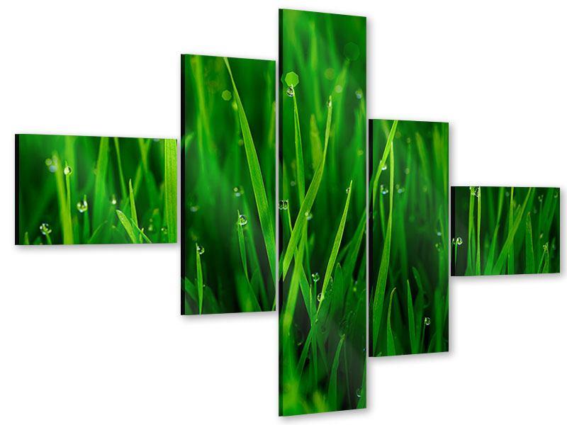 Acrylglasbild 5-teilig modern Gras mit Morgentau