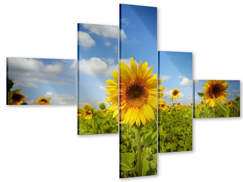 Acrylglasbild 5-teilig modern Sommer-Sonnenblumen