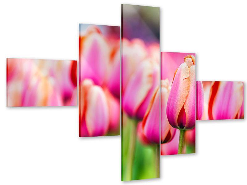 Acrylglasbild 5-teilig modern Pretty in Pink