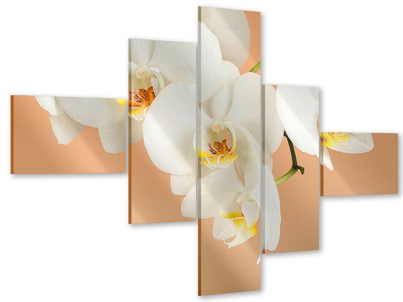 Acrylglasbild 5-teilig modern Weisse Orchideenblüten