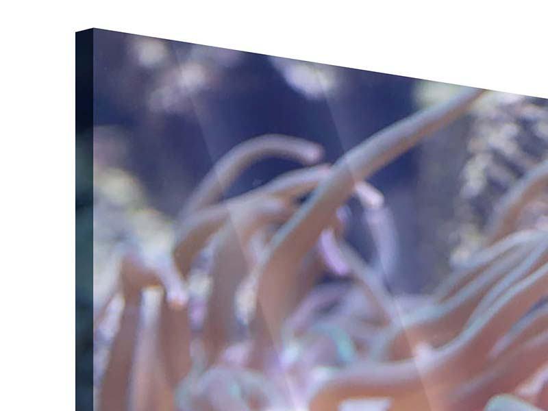 Acrylglasbild 5-teilig modern Korallenriff