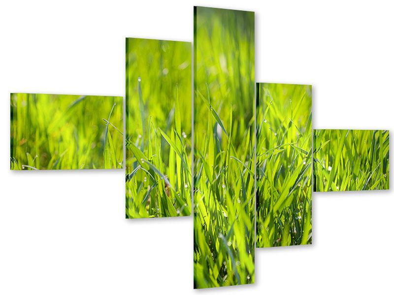 Acrylglasbild 5-teilig modern Gras im Morgentau