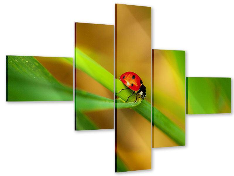 Acrylglasbild 5-teilig modern XXL Marienkäfer