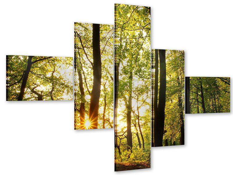 Acrylglasbild 5-teilig modern Sonnenuntergang zwischen den Bäumen