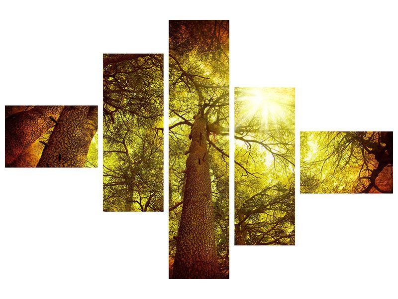 Acrylglasbild 5-teilig modern Cedar Baum