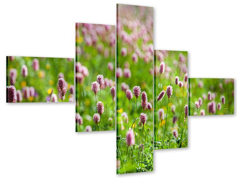 Acrylglasbild 5-teilig modern Der Wiesenklee