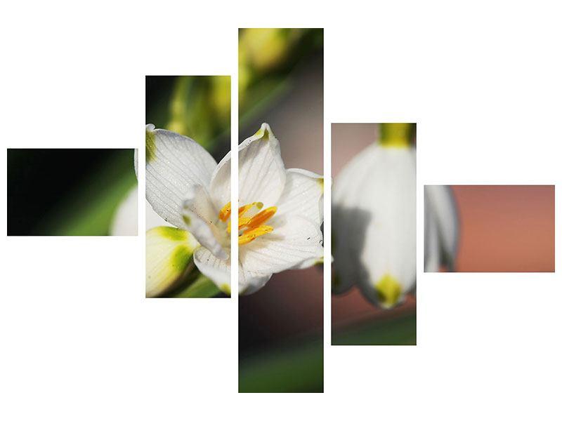 Acrylglasbild 5-teilig modern Schneeglöckchen XXL