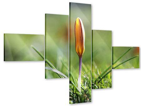 Acrylglasbild 5-teilig modern Die Blütenknospe
