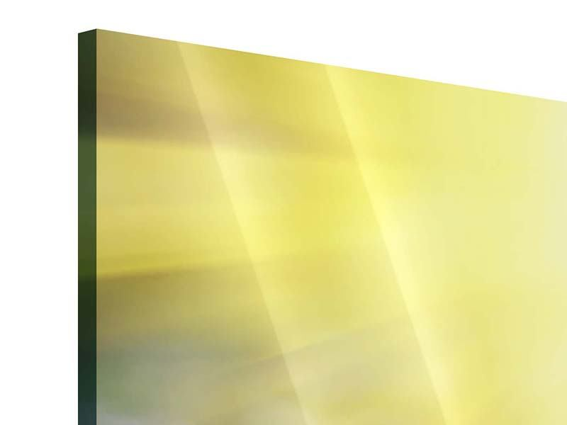 Acrylglasbild 5-teilig modern Blumige Wiese