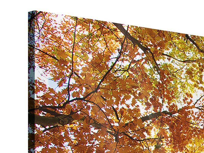 Acrylglasbild 5-teilig modern Herbstbäume
