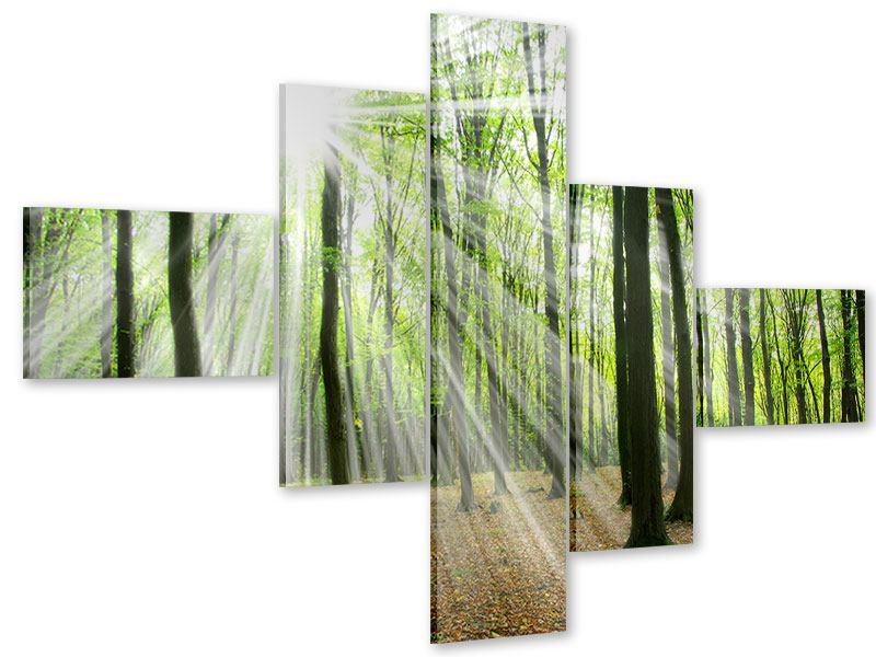 Acrylglasbild 5-teilig modern Magisches Licht in den Bäumen