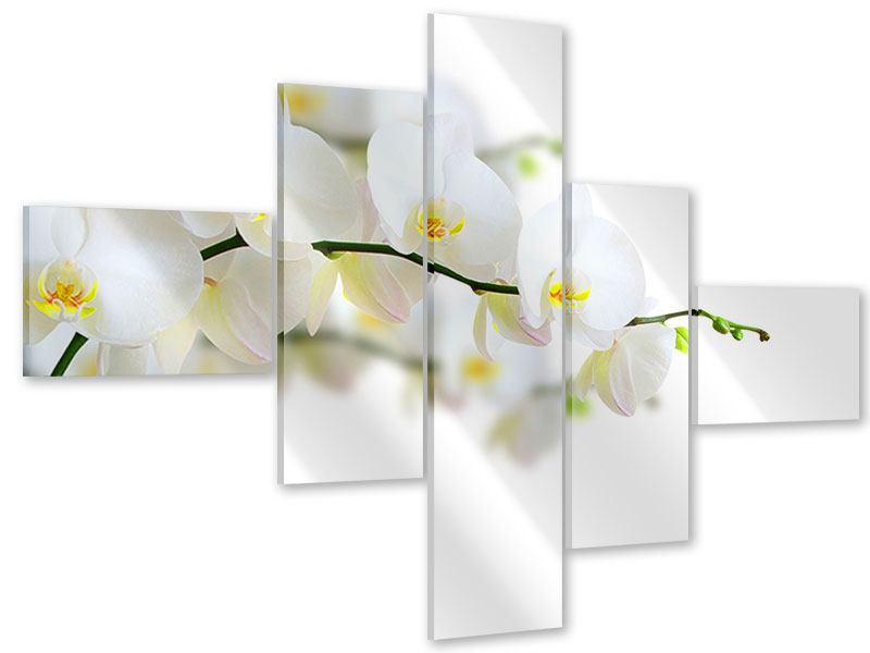 Acrylglasbild 5-teilig modern Weisse Orchideen