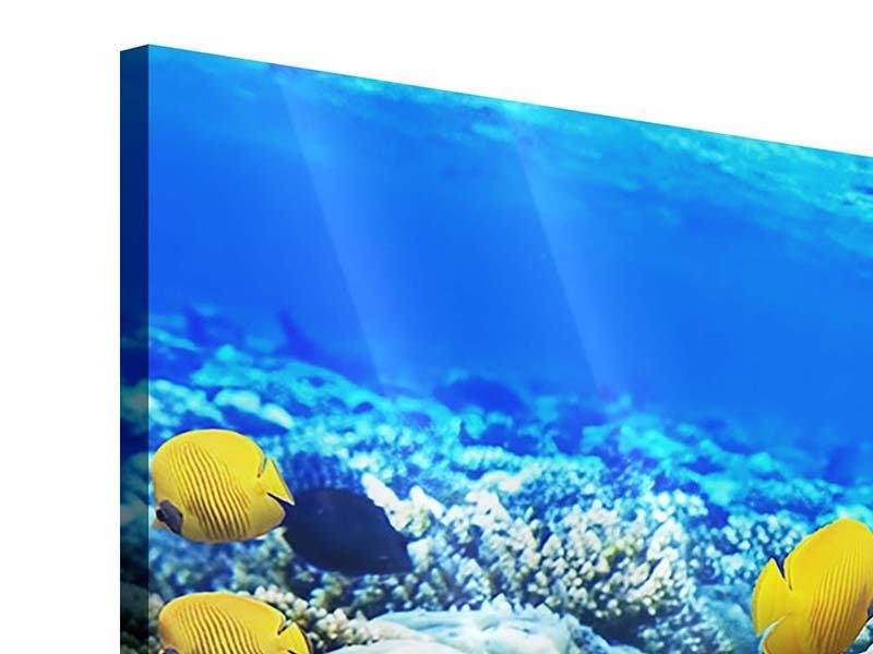 Acrylglasbild 5-teilig modern Fischaquarium