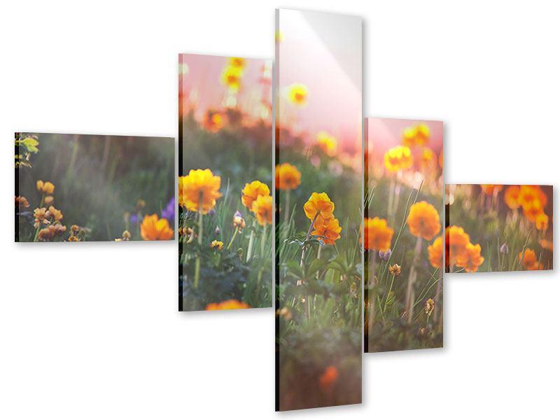 Acrylglasbild 5-teilig modern Die Bergwiese