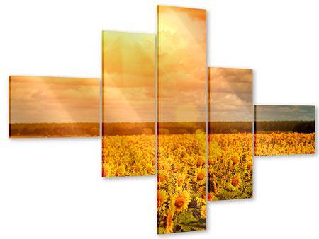 Acrylglasbild 5-teilig modern Goldenes Licht für Sonnenblumen