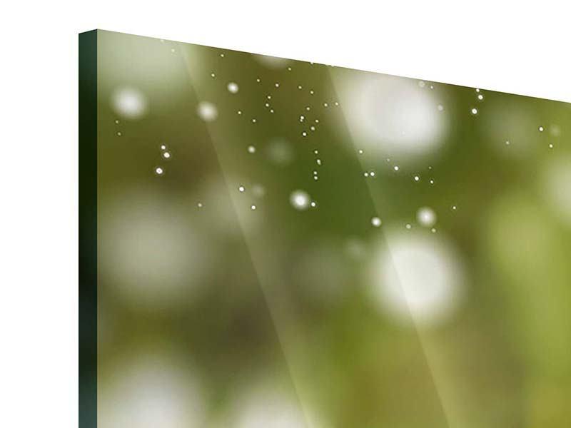 Acrylglasbild 5-teilig modern Lilien-Lichtspiel