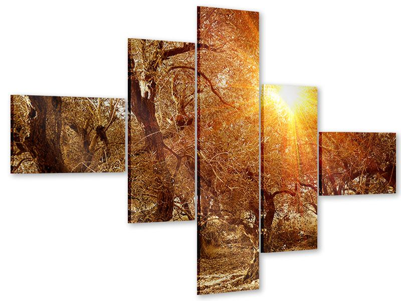 Acrylglasbild 5-teilig modern Olivenbäume im Herbstlicht
