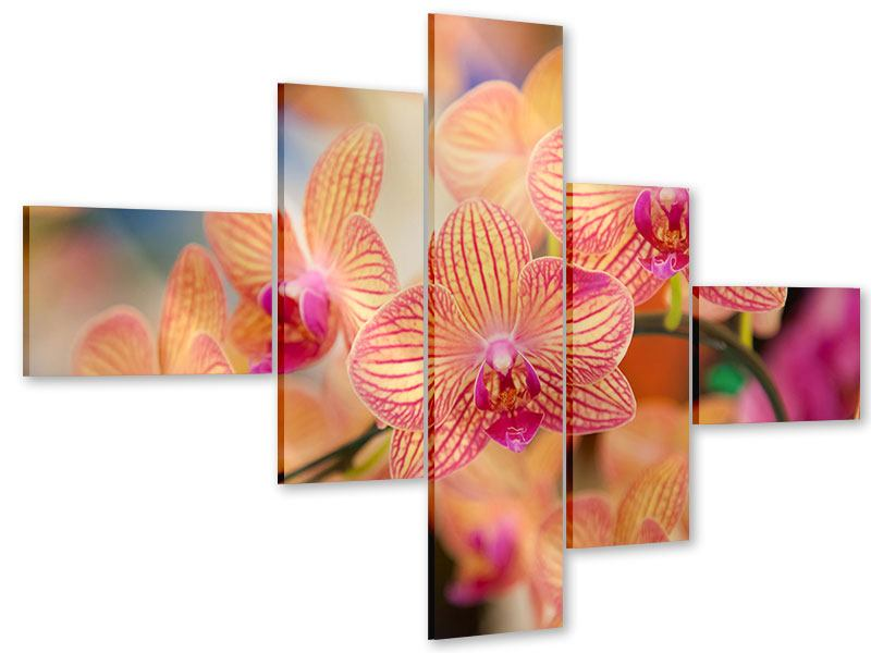 Acrylglasbild 5-teilig modern Exotische Orchideen