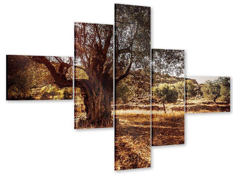 Acrylglasbild 5-teilig modern Olivenhain