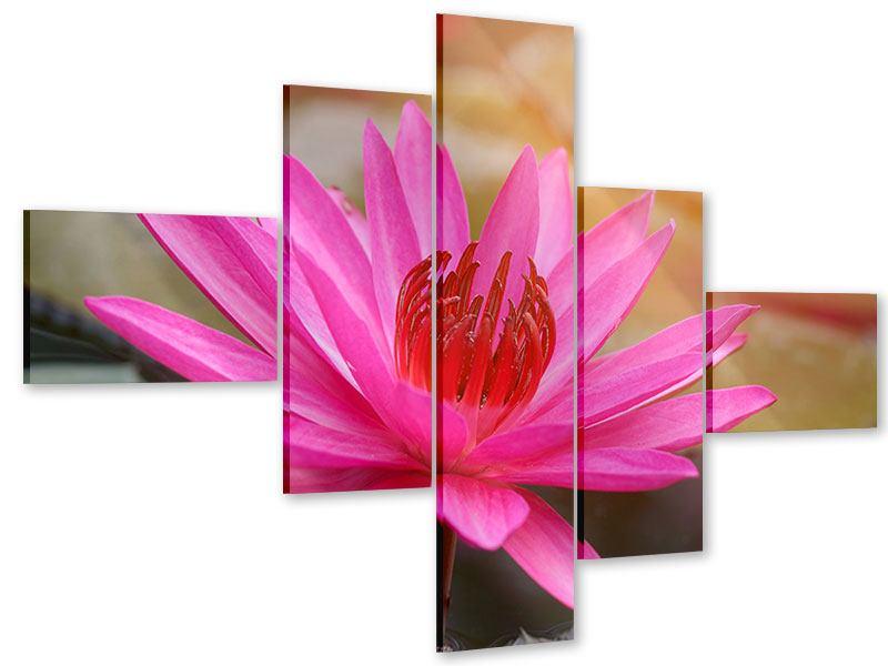 Acrylglasbild 5-teilig modern Sonnige Seerose